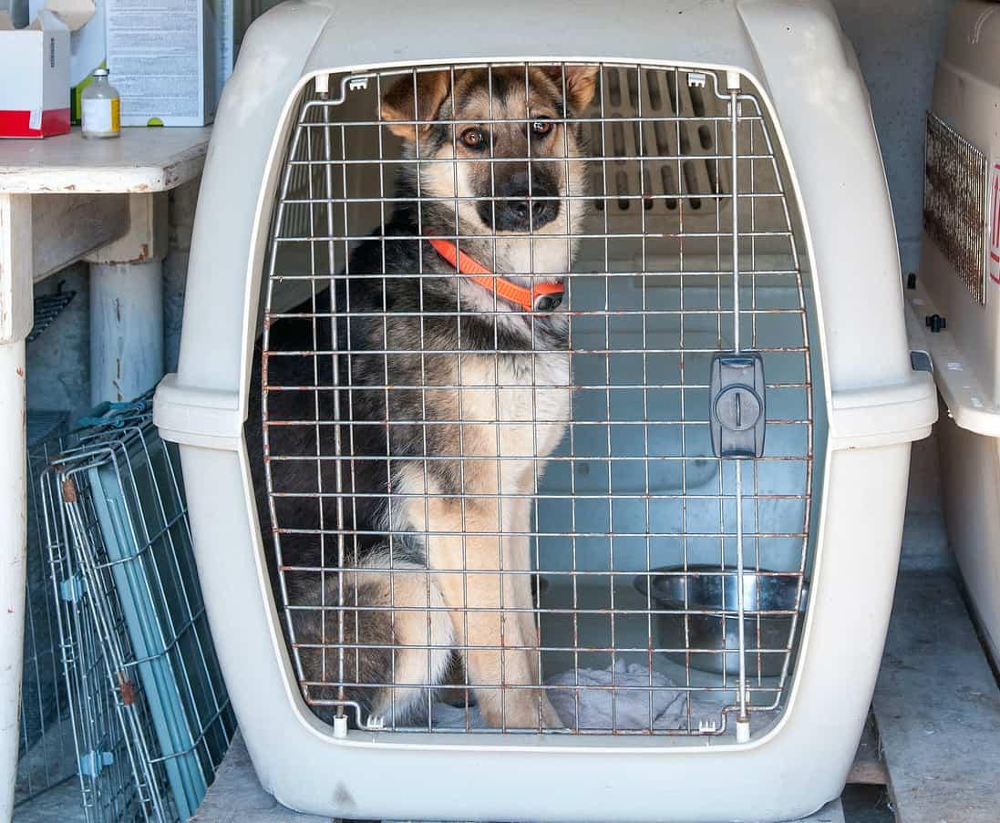perro-cesta